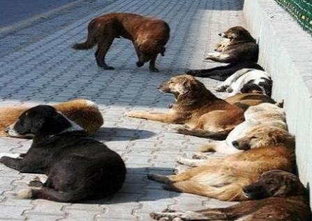Dogs-continue-to-be-on-biting-spree-in-Kashmir