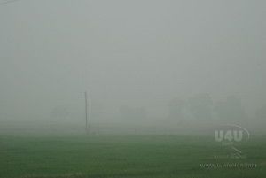 fogg on the way from satwari to International Border R.S (28)