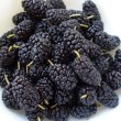 mulberries 002