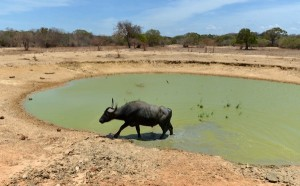 Yala Yala National Park drought (2)