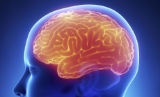 How aggression can change your brain