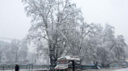 Snowfall in Srinagar turns it into a winter wonderland