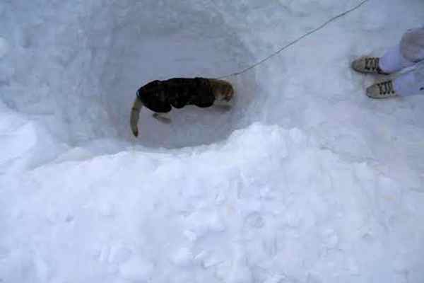 Mortal remains of one marytr recovered at Siachen; rescue operations continued